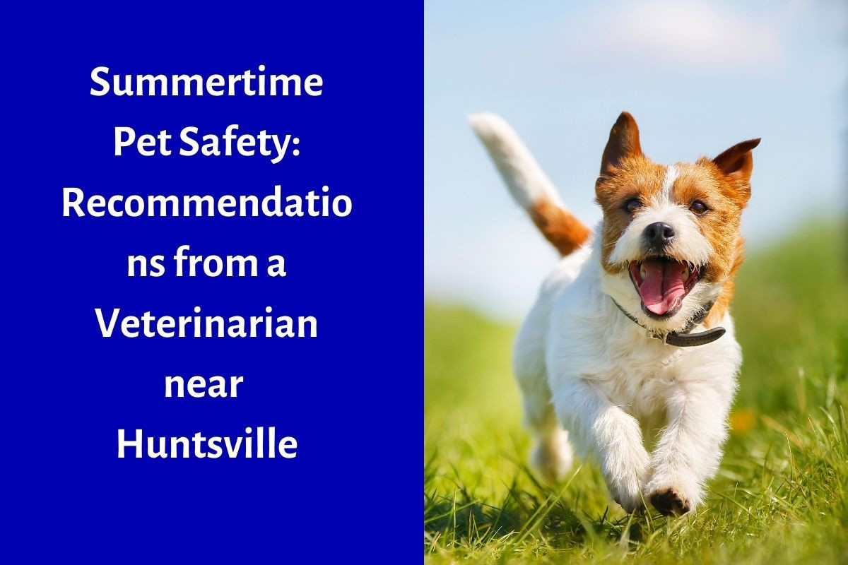 Summertime-Pet-Safety-Recommendations-from-a-Veterinarian-near-Huntsville