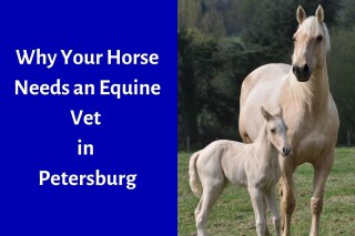 Why-Your-Horse-Needs-an-Equine-Vet-in-Petersburg