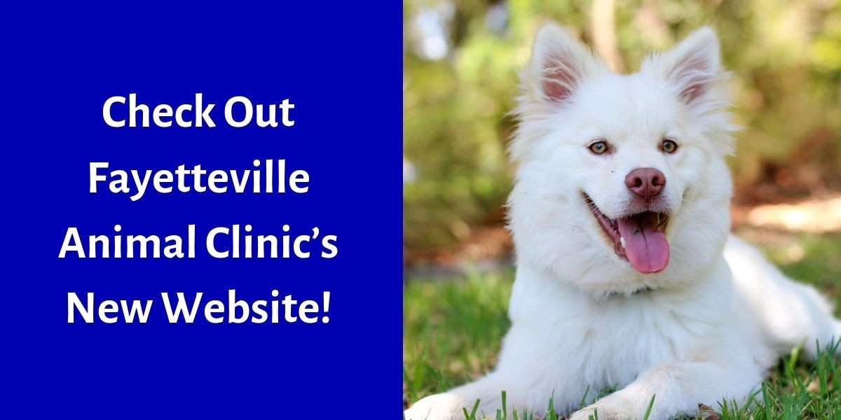 Check Out Fayetteville Animal Clinic's New Website!
