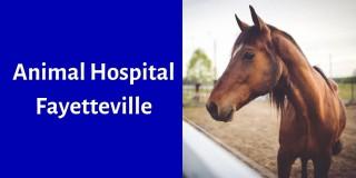 Animal Hospital Fayetteville